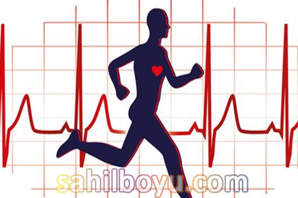kalp sağlığı hakkında bilinmesi gereken temel noktalar, kalp sağlığı kalp damar sağlığına bağlıdır, obezite kalp sağlığını olumsuz etkiliyor
