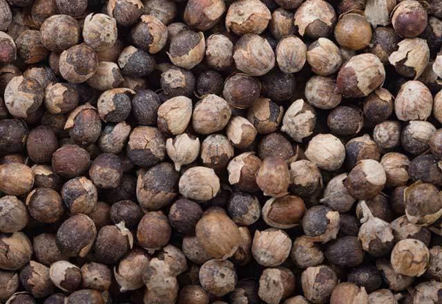 hayıt tohumu ile tüy dökme, hayıt tohumu ile kıl dökme, hayıt tohumlarının faydaları